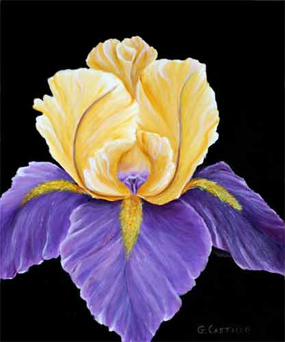 Royal Iris on Canvas
