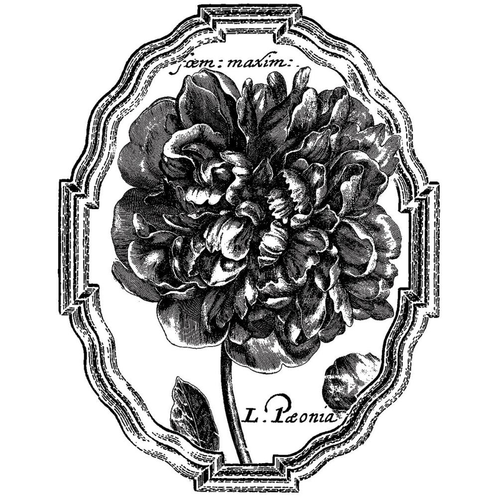 LaBlanche Silicone Stamp: Framed Peony