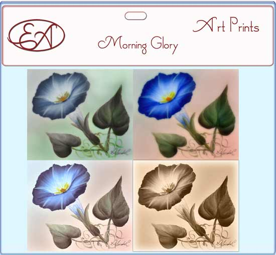 Morning Glory Prints