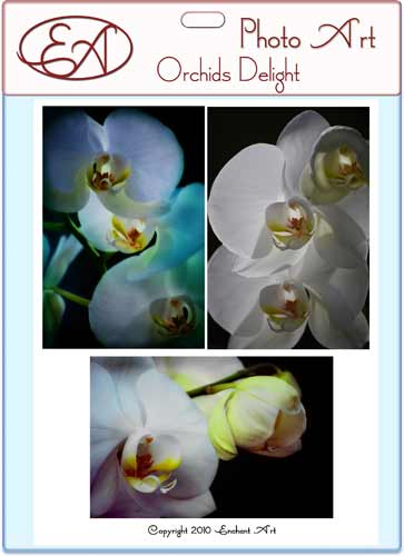 Orchids Delight