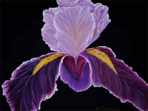Velvet Iris on Canvas