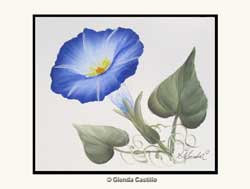 Morning Glory Hand-Painted Card